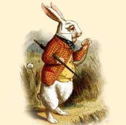 CRAFT Beer Store представляет новинки от White Rabbit