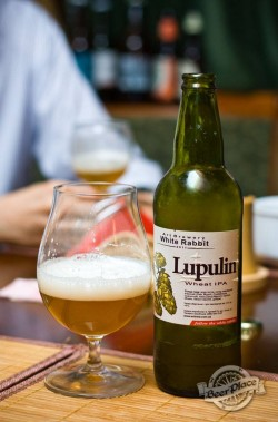 Дегустация пива Lupulin Wheat IPA от White Rabbit Art Brewery