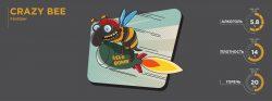 Crazy Bee – новый сорт от Fanatic Brewing Center