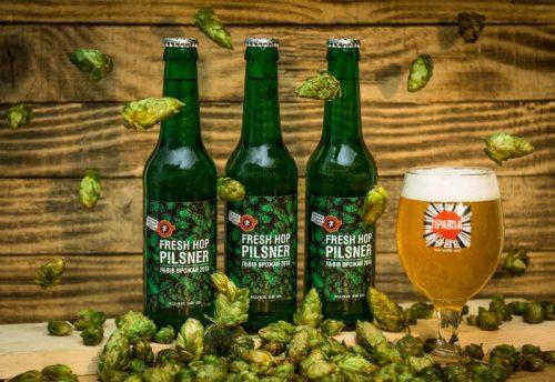 Fresh Hop Pilsner - ежегодное пиво со свежим хмелем от Правды
